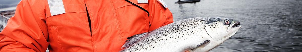 Diego sosteniendo salmón Australis – Contenidos