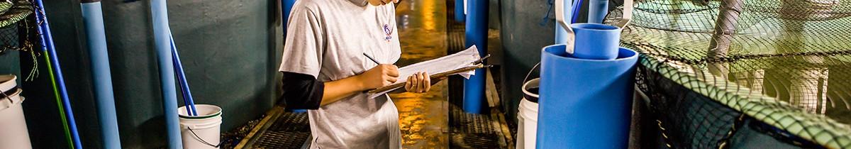 Diferencias entre salmoneros llevan al Gobierno a extender plazo para evaluar límites a niveles de producción