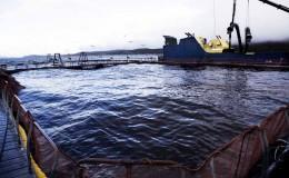 jaula centro mar con barco, low